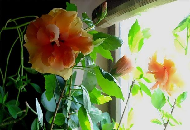 trandafiri japonezi galbeni